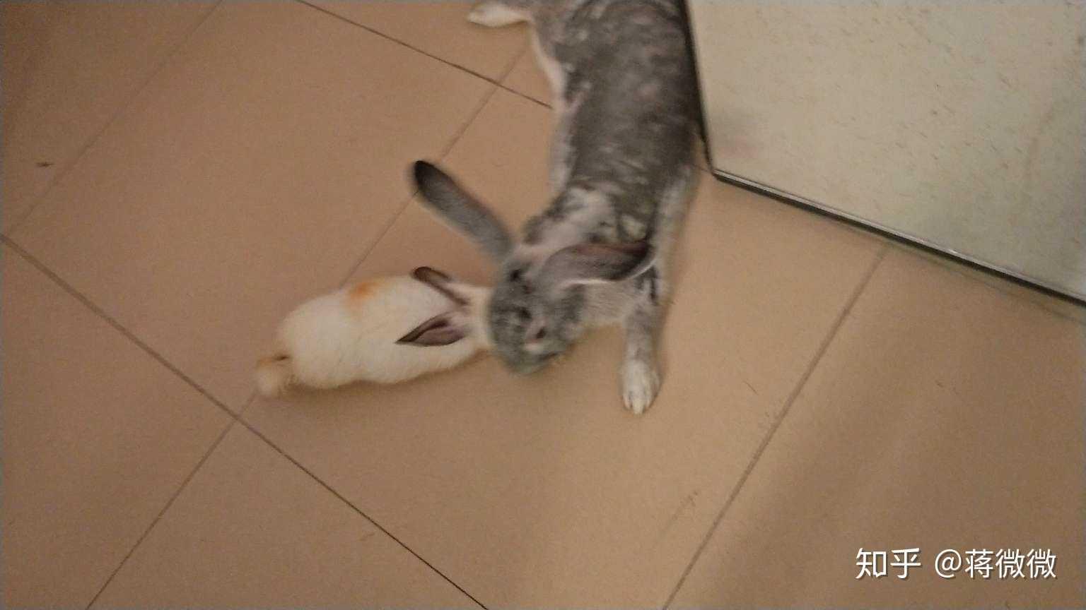 梦到兔子把蛇咬断了