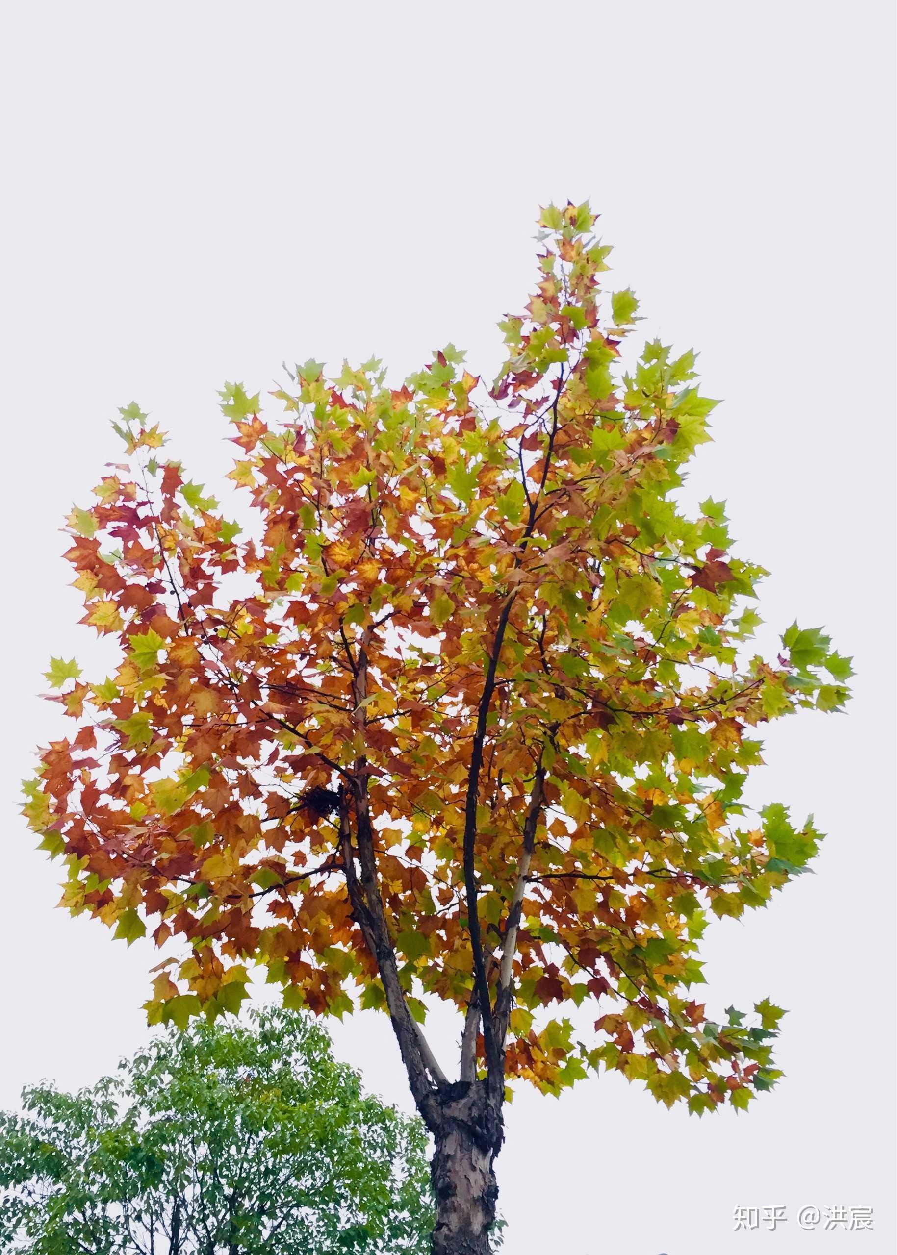 我是一棵秋天的树谱_\