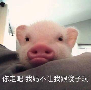 有哪些猪的搞笑图片或者表情?动态包潘金莲表情图片