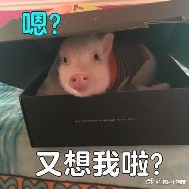 有哪些猪的搞笑图片或者地铁?表情表情包拥挤图片