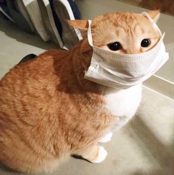 会被当成智障,还有口罩是个好东西,一可以挡表情,二可以遮大脸图片
