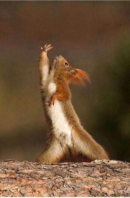 野生动物有哪些「动作」特别萌?牡丹江房情趣图片