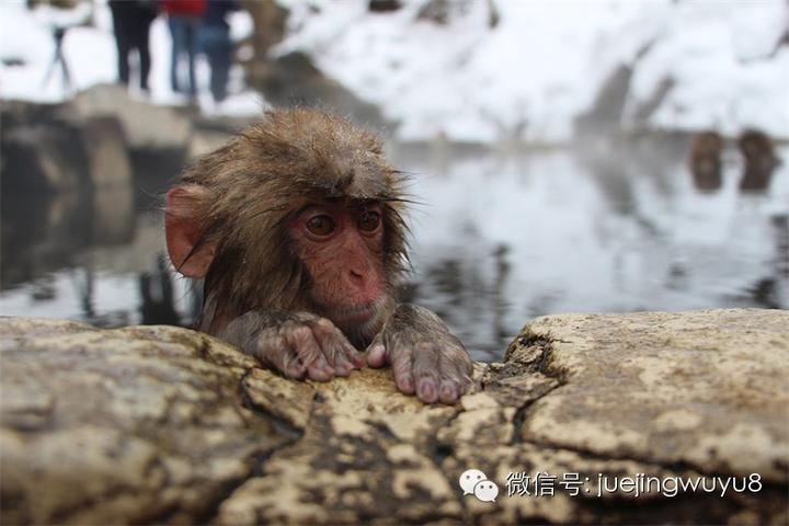 想去日本深度旅游 有哪些冷门的地方景点一定要去?