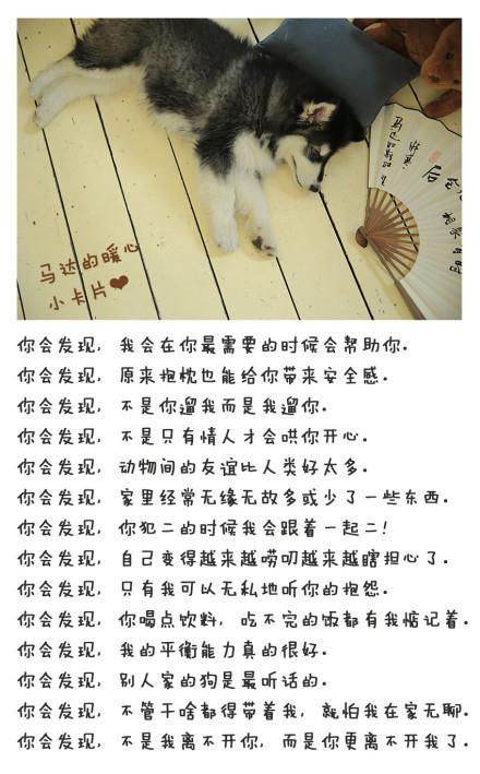 人与动物之间感情_人与动物感情的故事图片