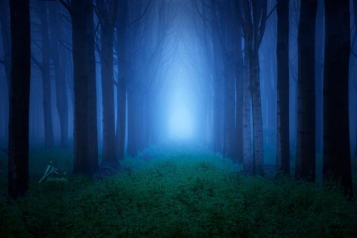 浅谈树林的艺术表现形式图片