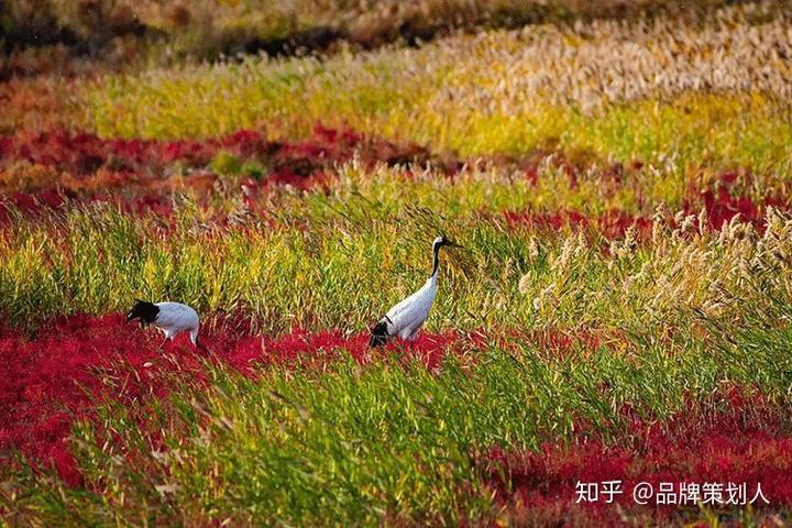 万千草木,春生夏长秋黄冬尽,枯荣有序,是它们的宿命.