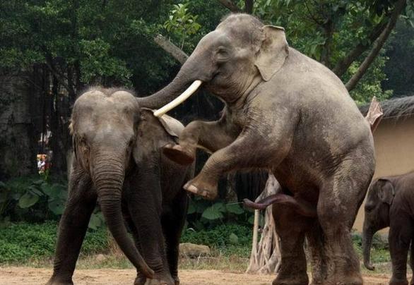 大白课|情到浓处大象也要疯狂啪啪啪