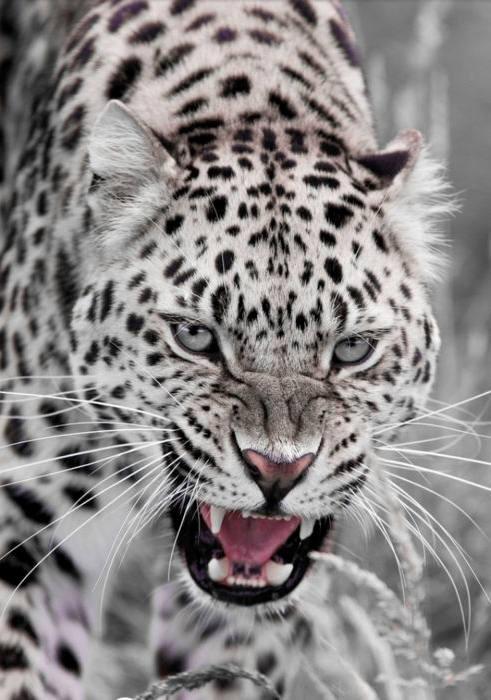 什么动物的眼睛最好看?