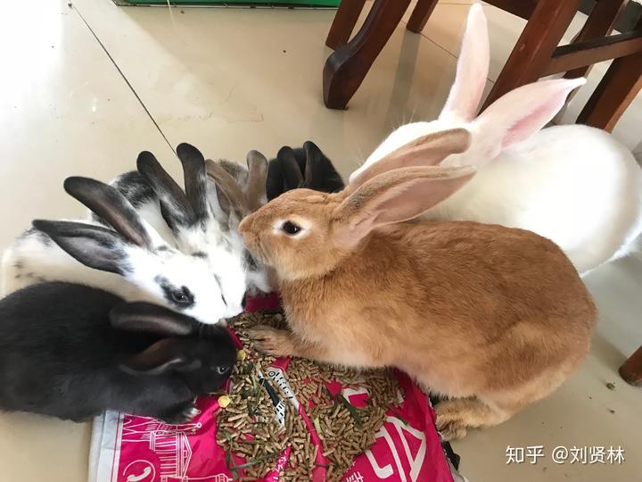母兔子,每个月一窝小兔子,是不是对母身体兔子不好?蜱虫很多怎么v兔子图片