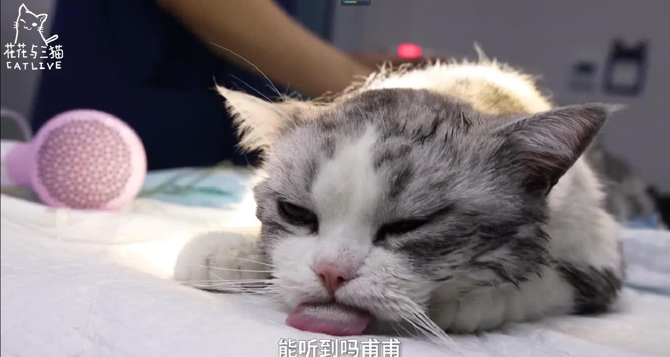up主叫做花花与三猫catlive,视频地址在此https://www.bilibili.