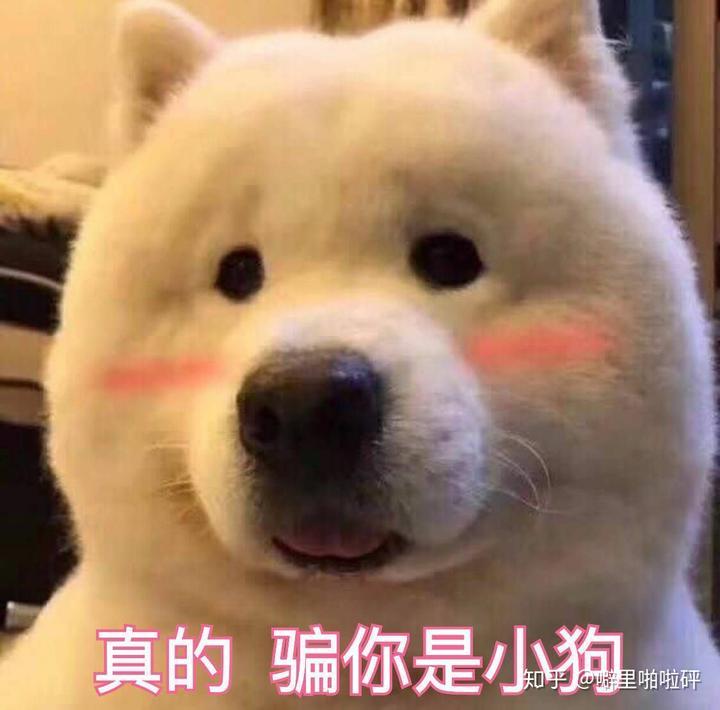 壁纸 动物 狗 狗狗 600_592