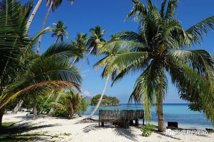 椰树海岛风景图片