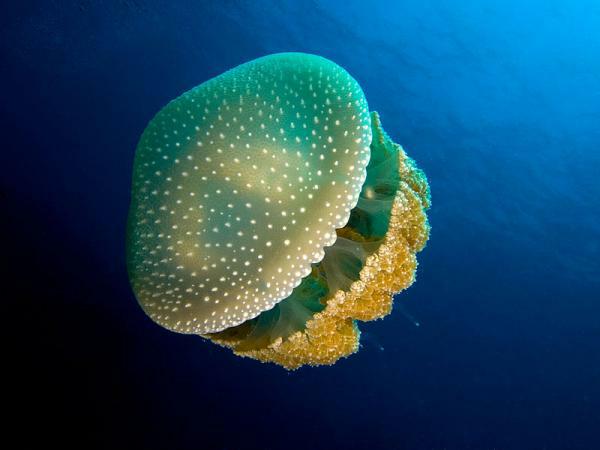 海洋里不光有长相怪异的生物,还有一些颜值很高的海洋图片