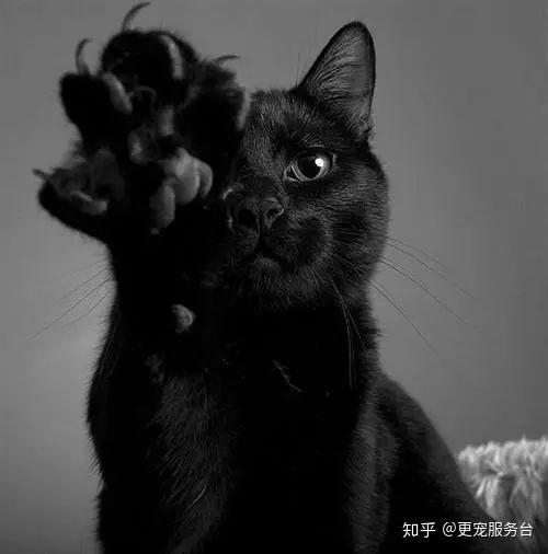 胡乱瞎扯说 在 中世纪的欧洲和 古埃及的波克诺神传说中,认为黑猫是