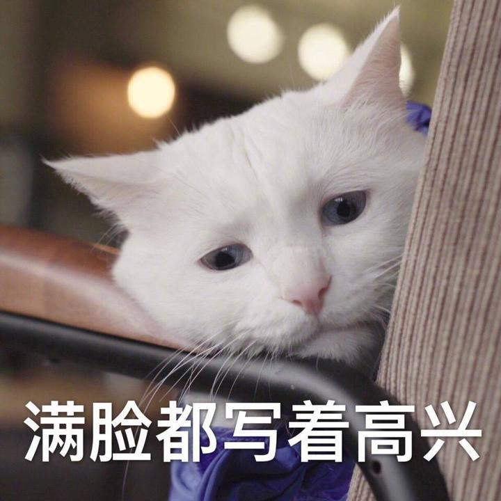 你有哪些关于猫狗的表情?表情包头贱贱蘑菇搞笑图片