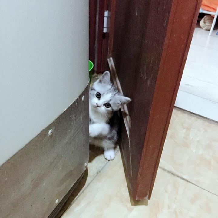 我每次洗澡,她都守在门口,扒开一条缝,静静看着你,你关上门,她还会再