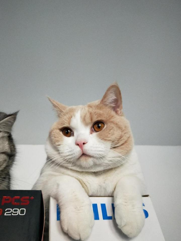 一个喜欢猫的男人_喜欢养猫的独身男人是怎样的人?