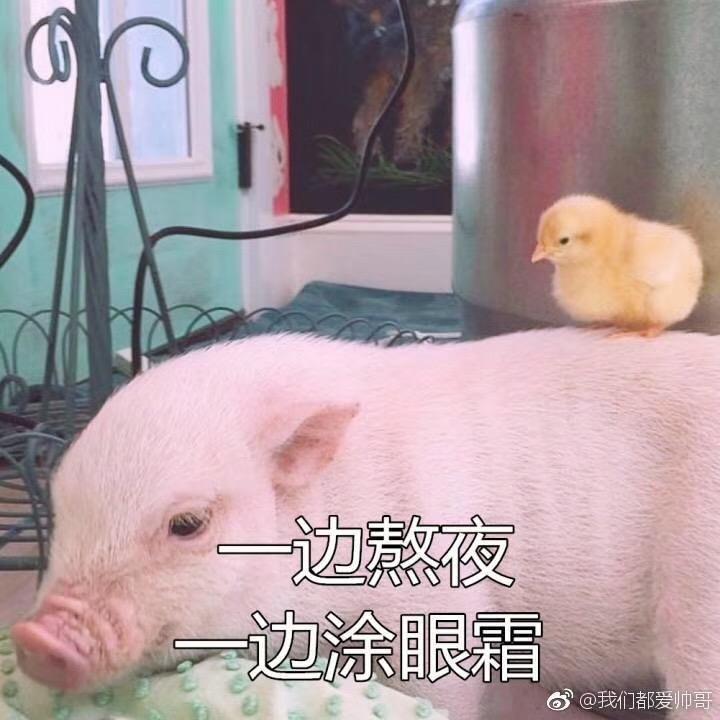 有哪些猪的搞笑图片或者表情?萌手机图片呆表情包图片