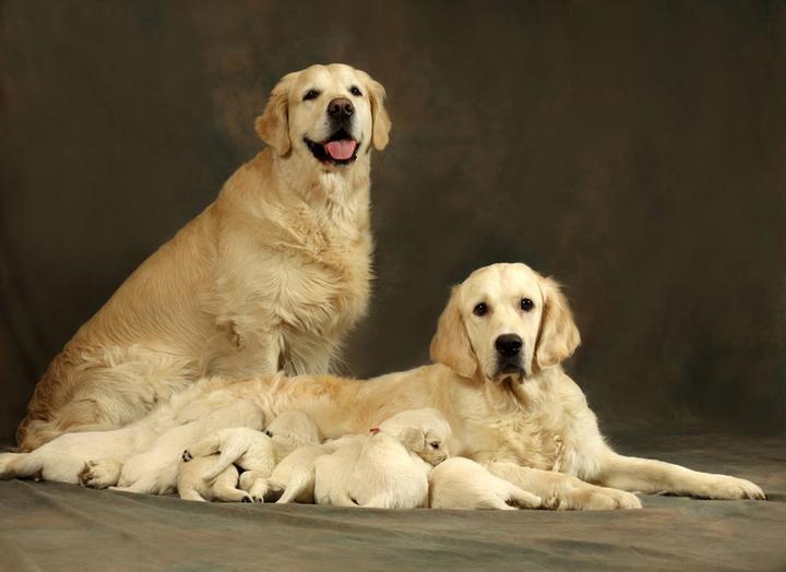 女人和狗茎大战偷拍乱伦_【dogtalk-16-】乱伦还是科学? 谈谈纯种犬繁殖那些事