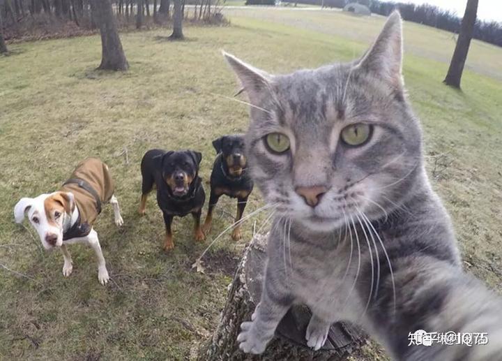 猫科动物与犬科动物的差别,人一眼便知,人脑非常擅长学习,归纳,推理.