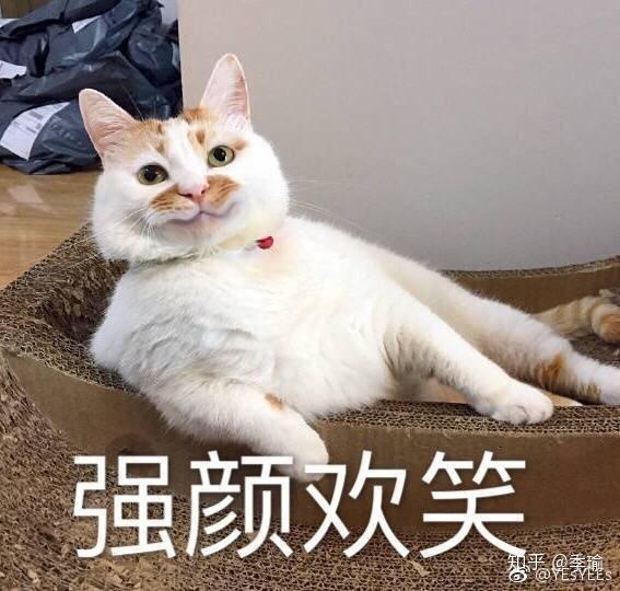 壁纸 动物 猫 猫咪 小猫 桌面 567_540
