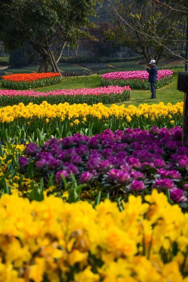 春天的风景犹如
