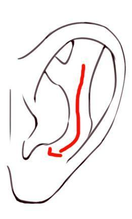 写实耳朵的结构看起来复杂,但是二次元中耳朵的绘制也基本由此演变