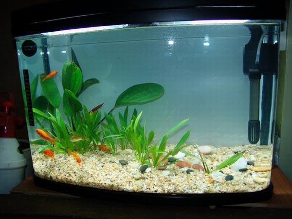 鱼缸摆放风水