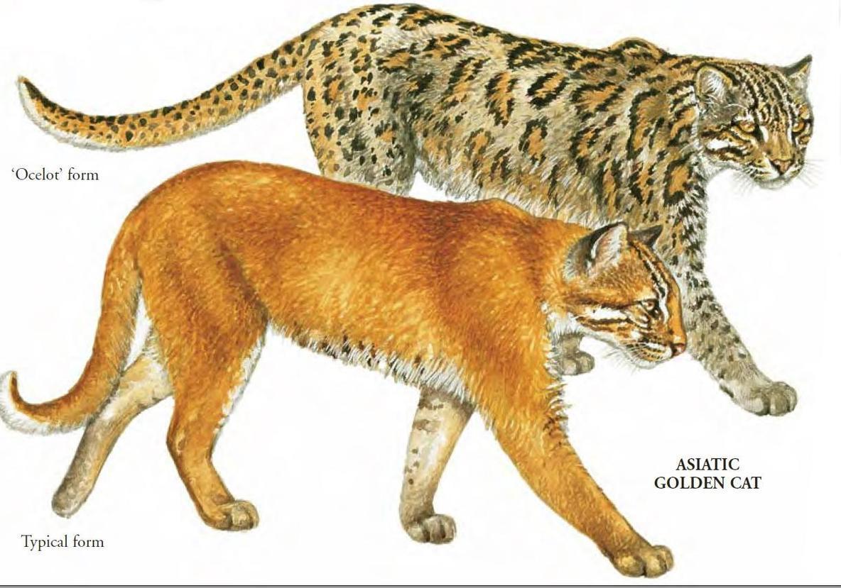 中国古代有猫吗?家猫是本土起源的吗?