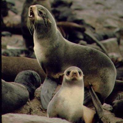 怎样辨别海豹、海狮、海象、海牛和海狗等等带「海」字的动物?