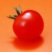 有营养的番茄