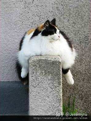 为什么猫的反应速度比人快,但是逗猫的时候看