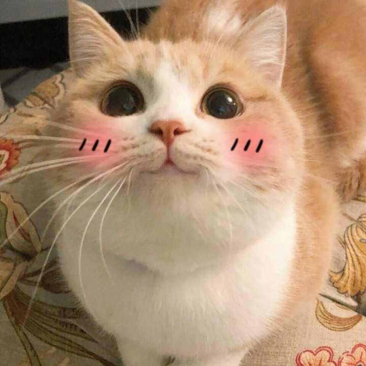 猫咪视频_有哪些超级可爱的猫的照片或视频?