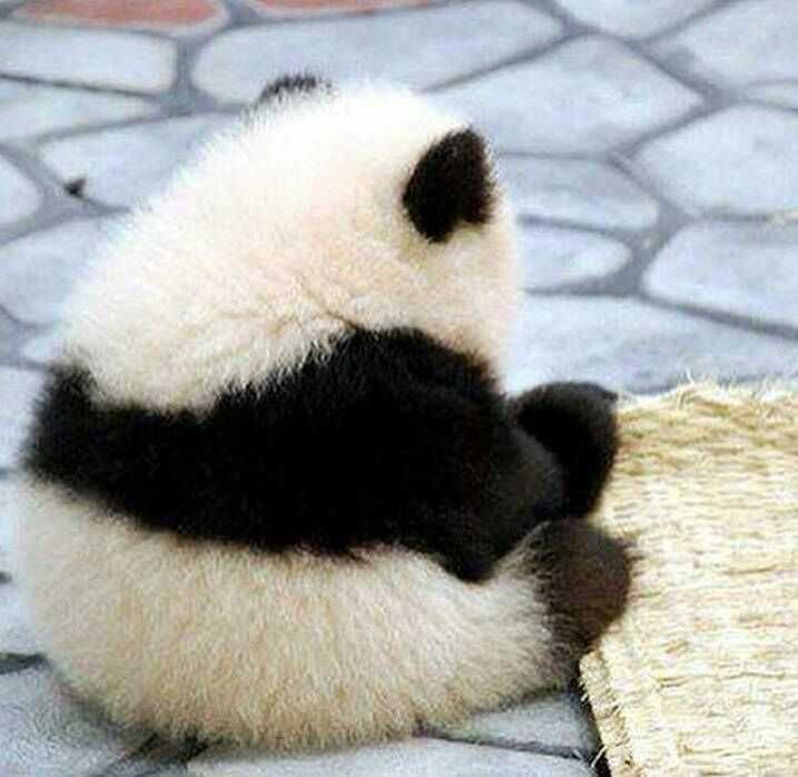 WWW_698AA_COM_壁纸 大熊猫 动物 717_698