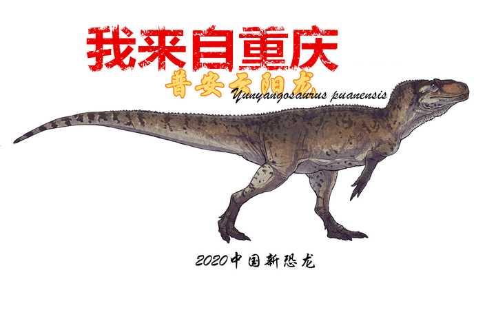 重庆云阳发现比轿车还大的食肉恐龙!