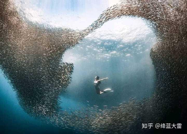 水肺跟自由潜水的区别?