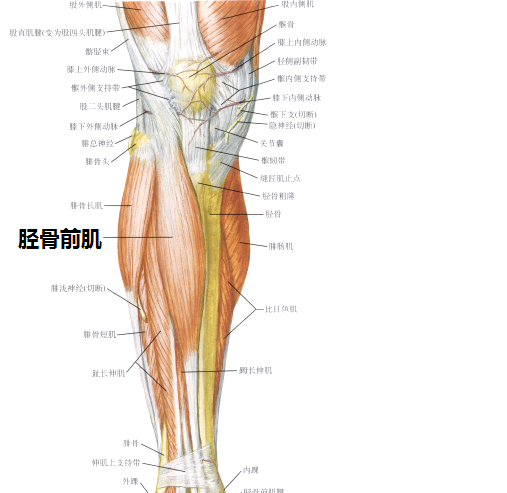一直被說走路姿勢很難看像孕婦,是因為膝蓋原因嗎?圖片