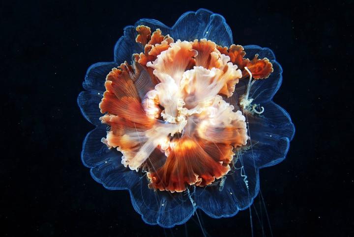 海洋生物可以有多萌