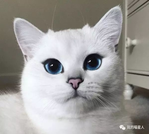 猫真的天生爱吃鱼吗?真相来了(图5)