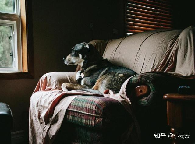 狗狗为什么老打瞌睡,它们做梦时会梦到主人吗?(图1)