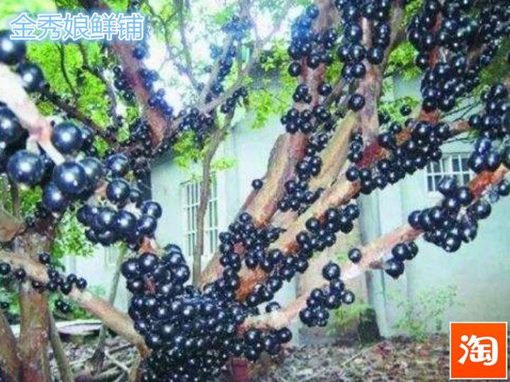 嘉宝果属于凉性还是热性水果(嘉宝果皮和籽能吃吗)