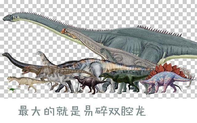 恐龙体型为什么能长那么大?