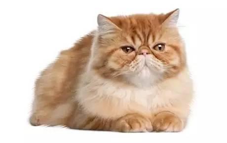猫打喷嚏不是小事(图6)