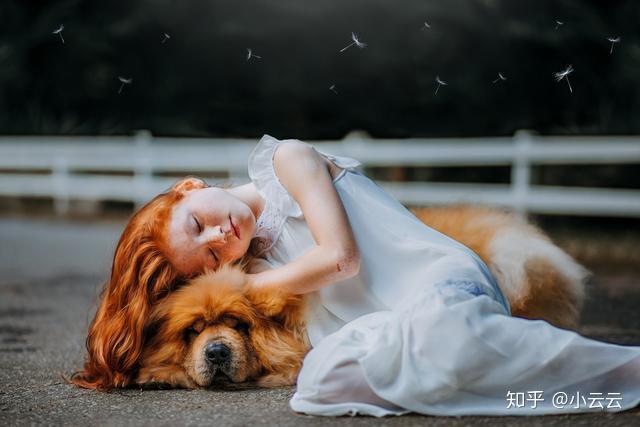 狗狗为什么老打瞌睡,它们做梦时会梦到主人吗?(图4)