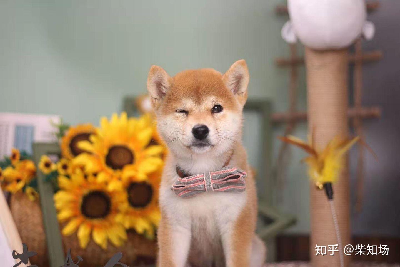 種類 小型 犬