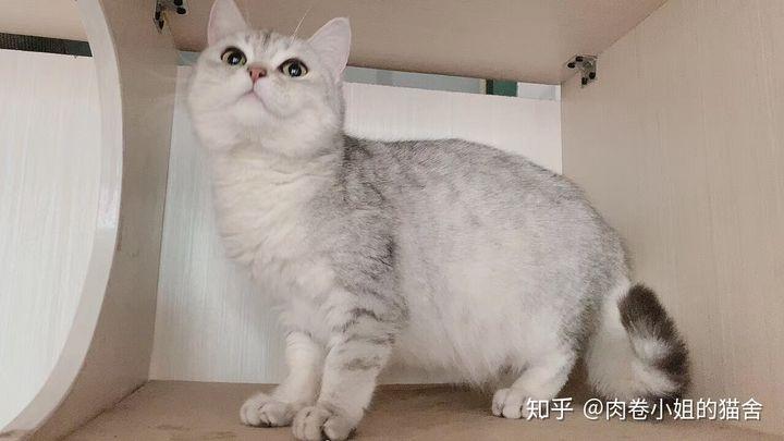 (最全攻略)母猫生产前的准备工作有哪些?如何给猫接生?接生完怎么护理小猫?(图1)