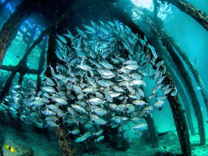 潜水百科:在哪学潜水
