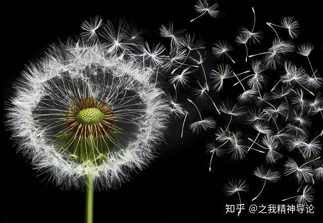 最新披露:哀怨种子——非常的妖——危险理由_图1-4