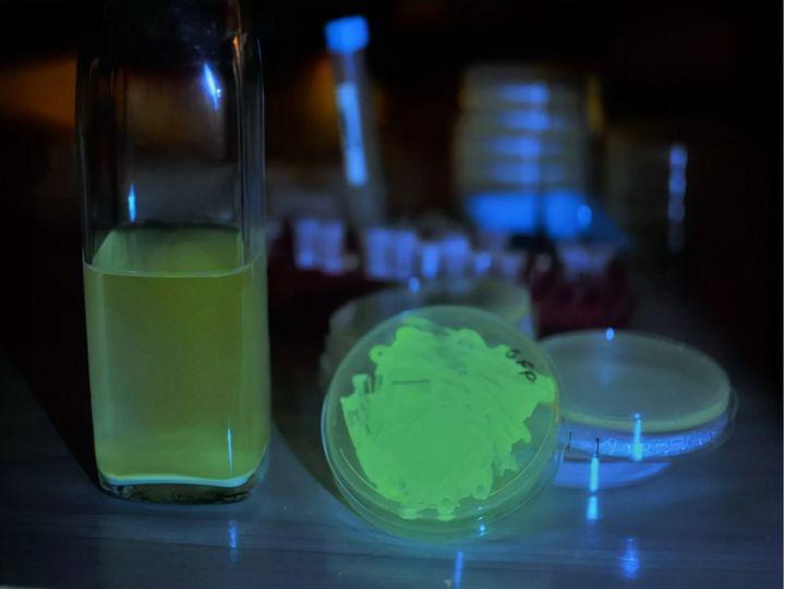 洗衣液里面有荧光剂吗(荧光剂的毒性与食盐相当吗)插图(4)