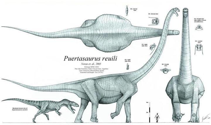 为什么现在的动物长不了恐龙那么大?